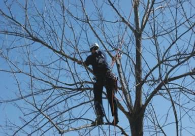 pruning broken limbs
